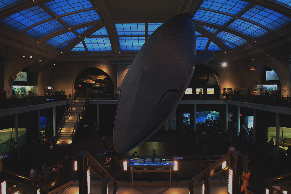 IHEARTALICE_americanmuseumofnationalhistory_08