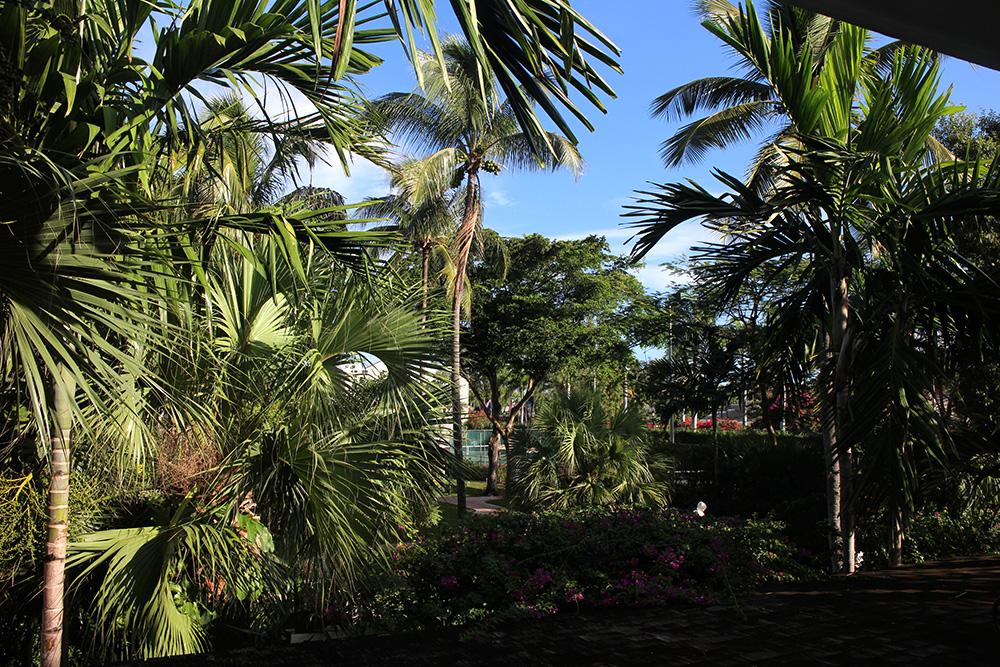 IHEARTALICE_Bahamas_08