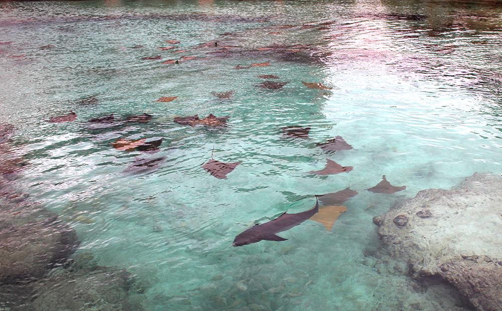 IHEARTALICE_Bahamas_53
