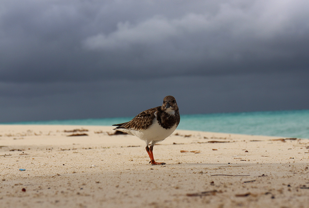 IHEARTALICE_Bahamas_76
