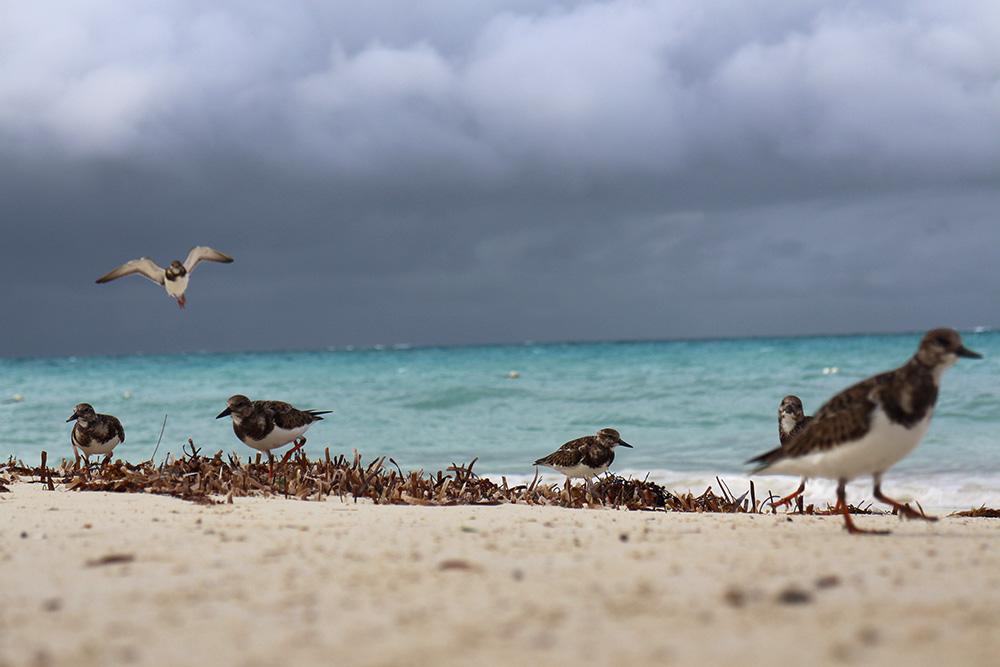 IHEARTALICE_Bahamas_77