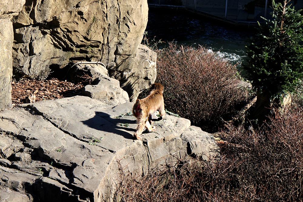 IHEARTALICE_centralpark_zoo_06