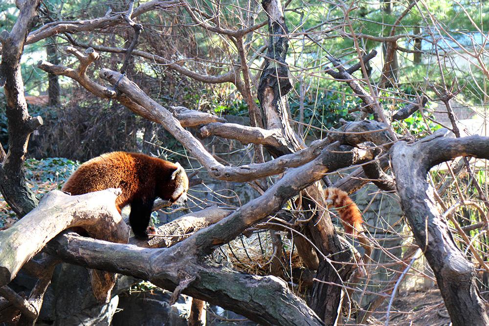 IHEARTALICE_centralpark_zoo_07