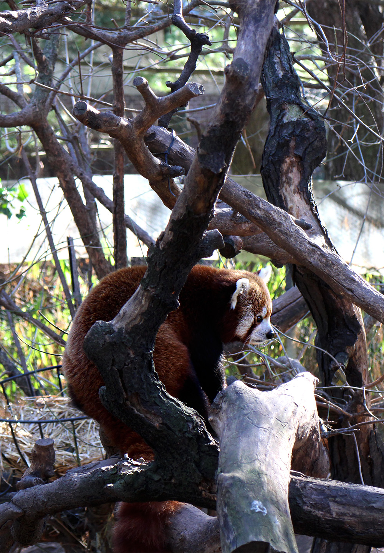 IHEARTALICE_centralpark_zoo_09