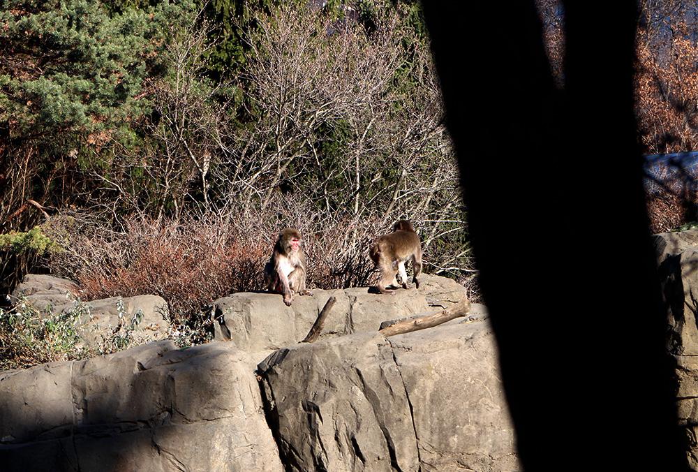 IHEARTALICE_centralpark_zoo_10