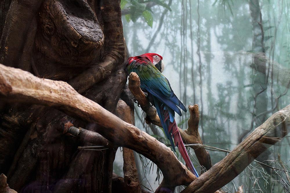 IHEARTALICE_centralpark_zoo_13