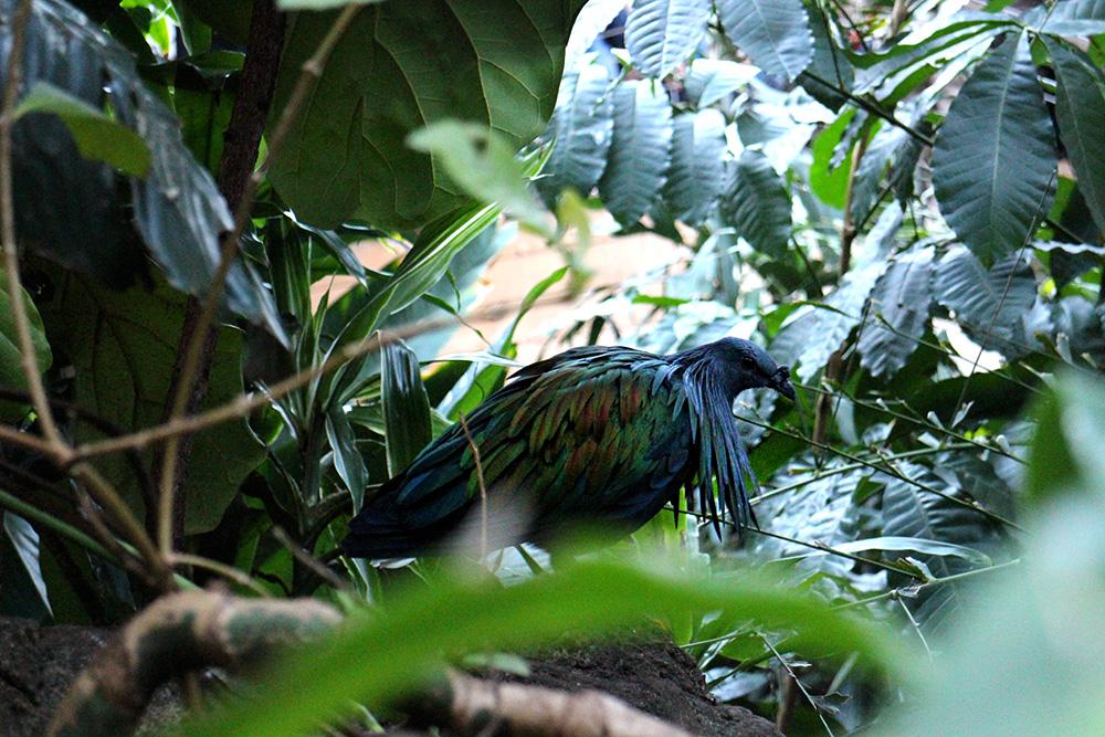 IHEARTALICE_centralpark_zoo_15