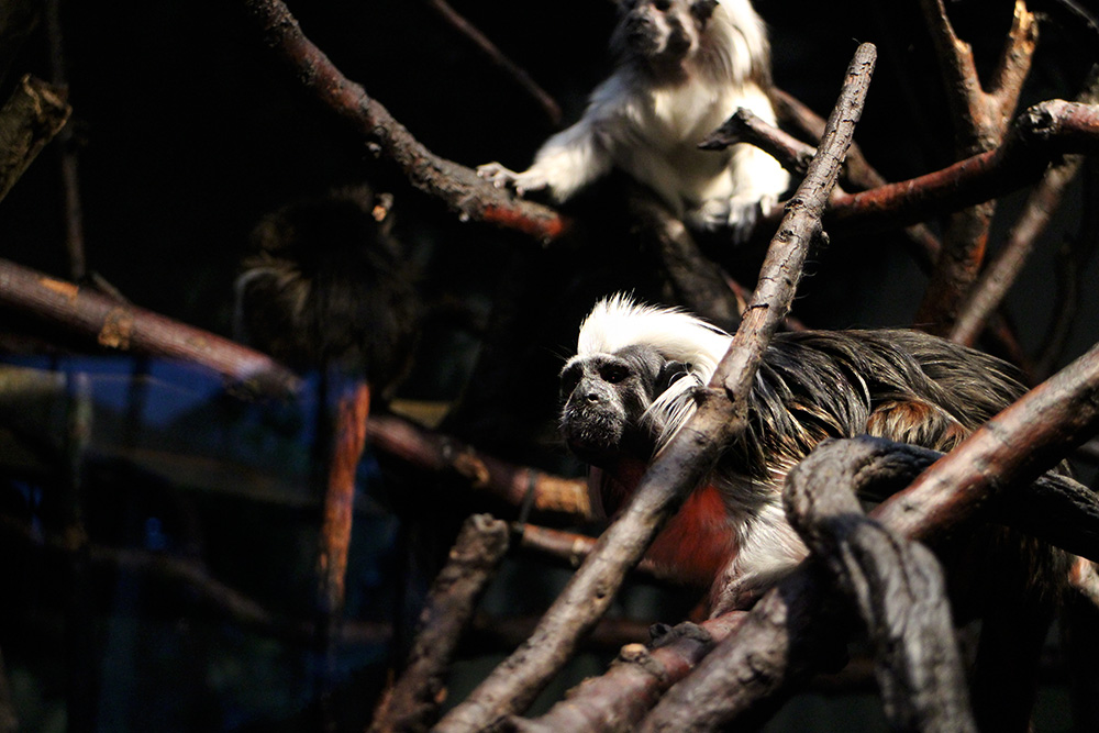 IHEARTALICE_centralpark_zoo_17