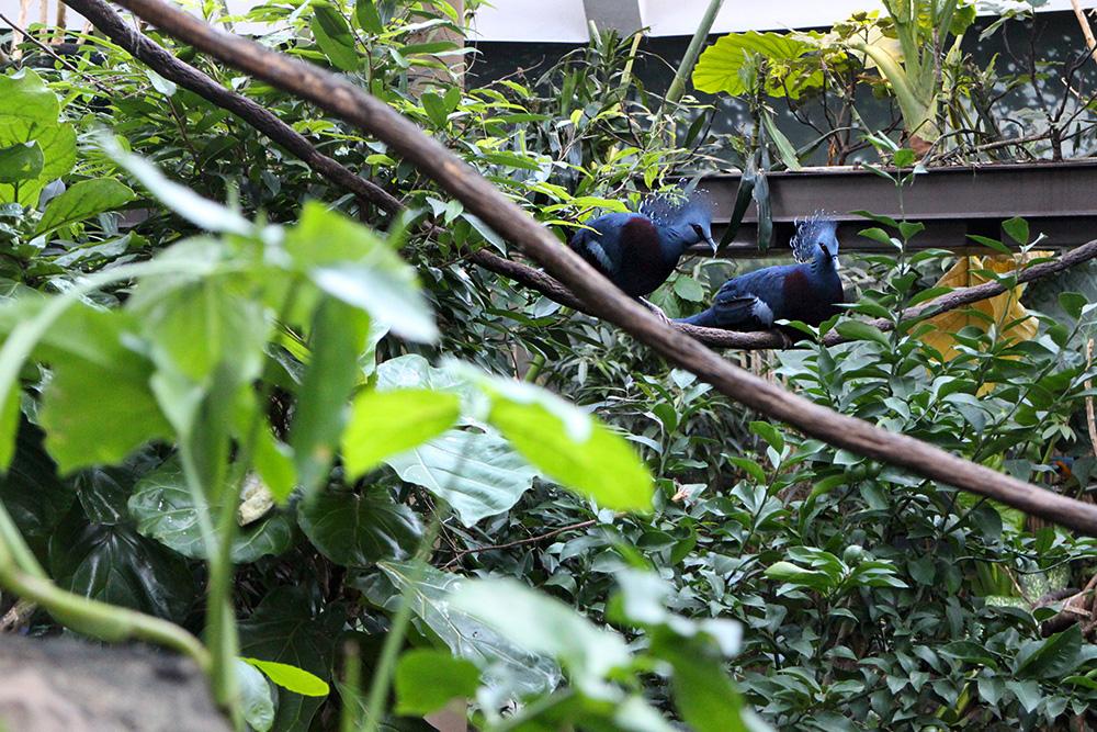 IHEARTALICE_centralpark_zoo_20