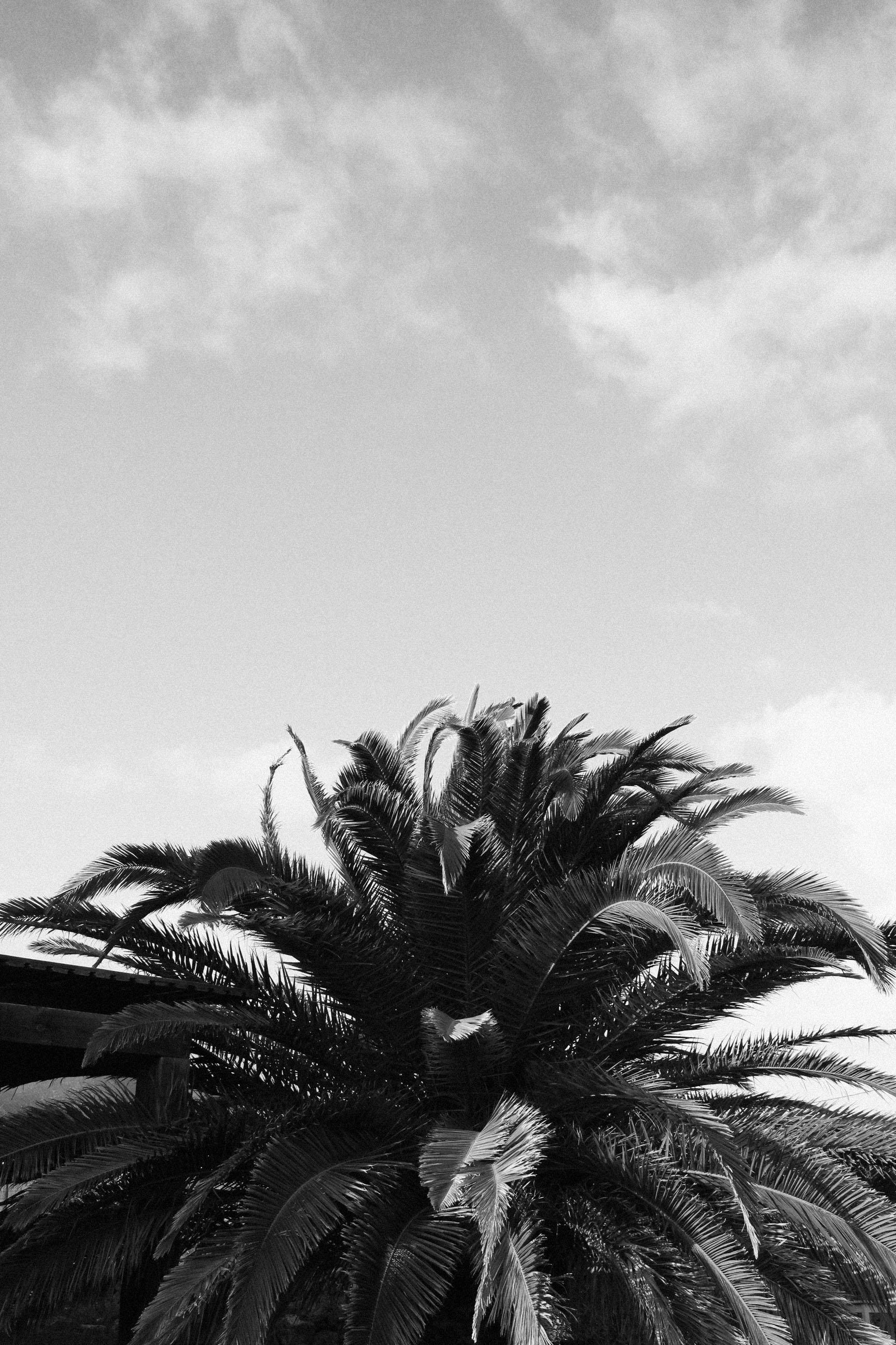 IHEARTALICE_Fuerteventura_10